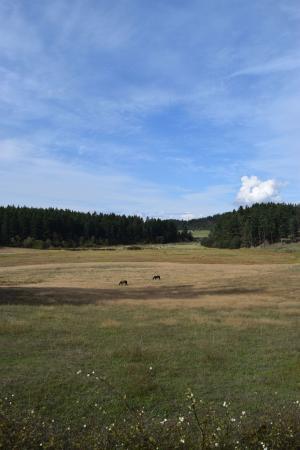 Juniper Lane Guest House: View of backyard pasture