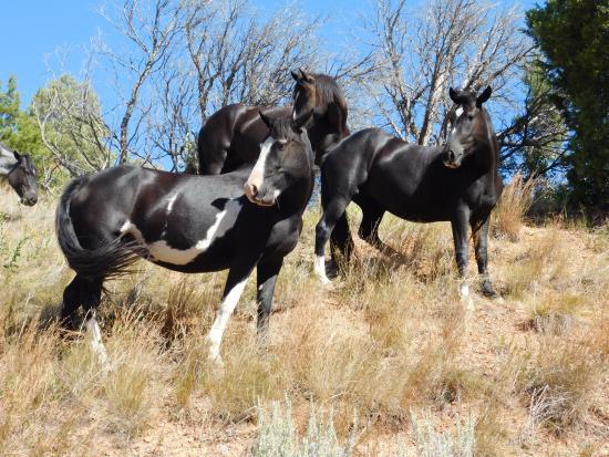 Theodore Roosevelt National Park: Beautiful Wild Horses!