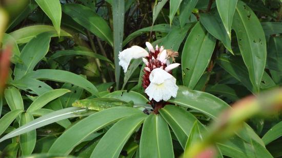 Las Islas Lodge: Flowers Everywhere