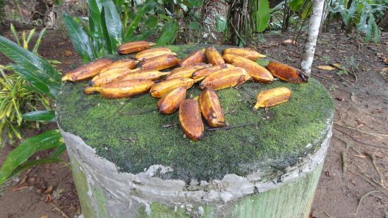 Las Islas Lodge: Food for Local Wildlife