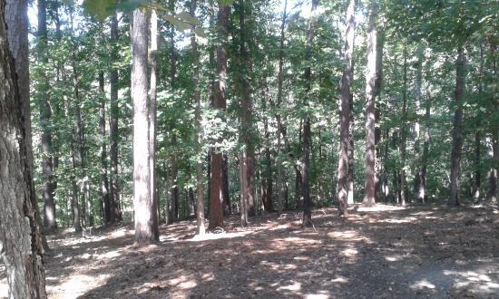 Dogwood Cottages: Peace & quiet