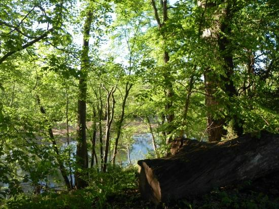 Lesterville, MO: A peak of the Black River through the trees.