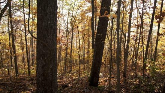 Lesterville, MO: Quiet hikes in the woods are a great way to rejuvenate body & soul.