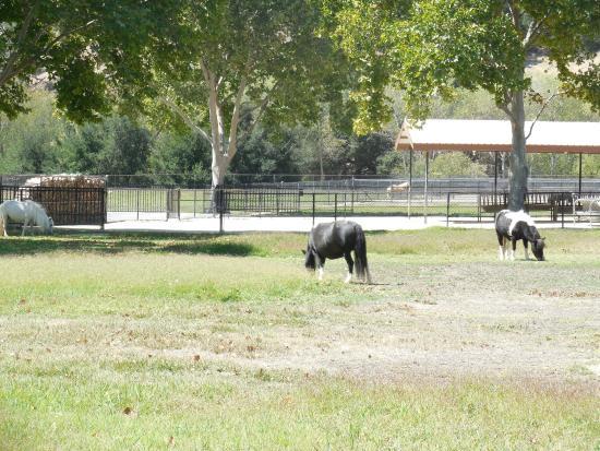 Solvang, CA: ranch