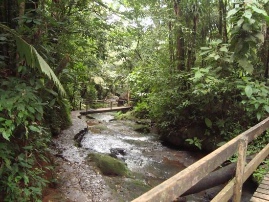 Termales del Bosque: Río