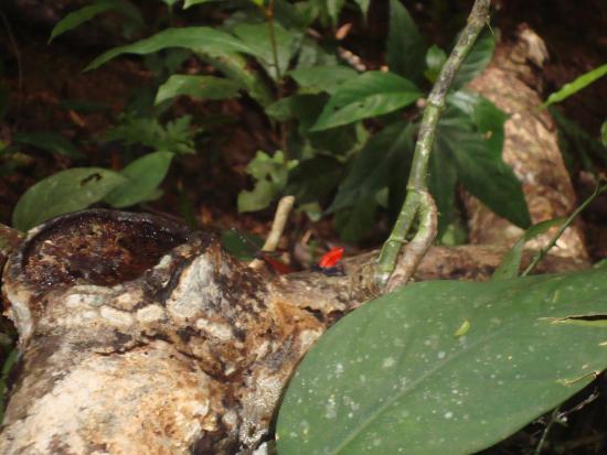 Termales del Bosque: Ranita