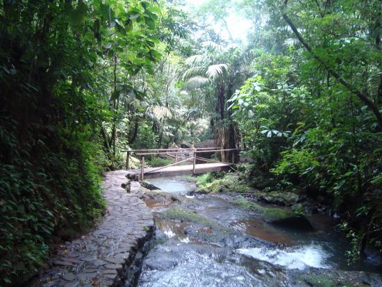 Termales del Bosque: Puente