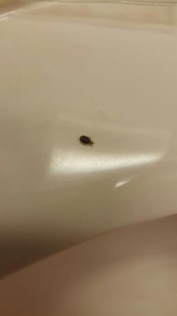 Magnuson Inn Pensacola: Bed bugs!! DO NOT STAY THERE!!!