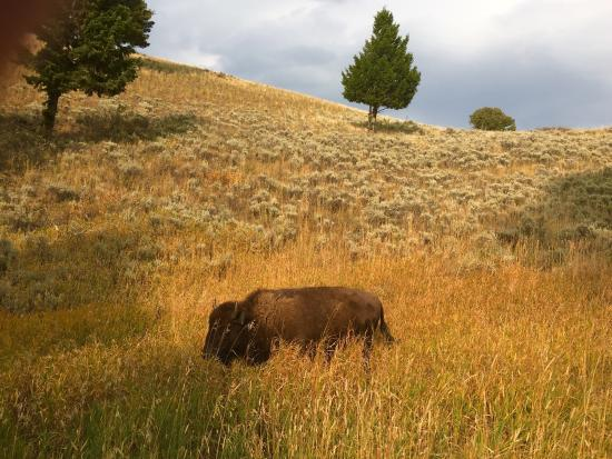 Blacktail Plateau Drive: photo0.jpg