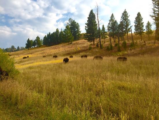 Blacktail Plateau Drive: photo1.jpg