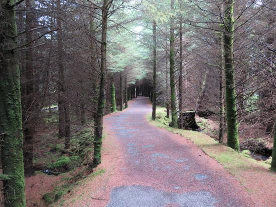 Millstreet Country Park: The trails are so shaded you need a flash during the day