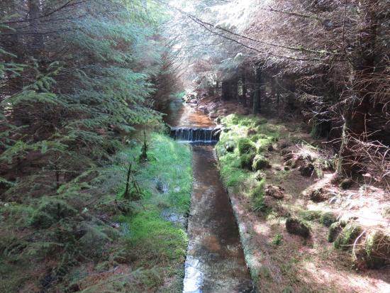 Millstreet Country Park: Stream