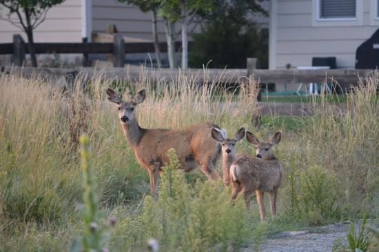 Parker, CO: Deer family in my way