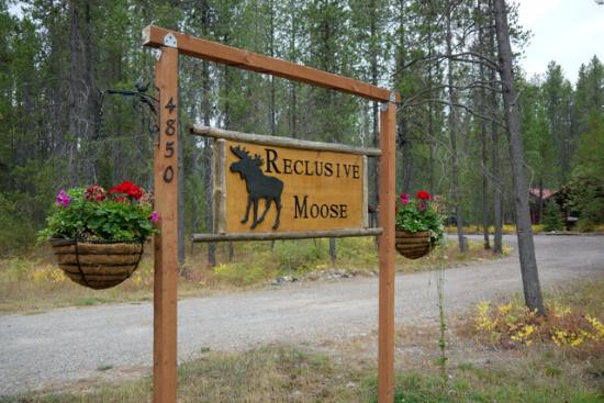 Columbia Falls, MT: Welcome to the Reclusive Moose