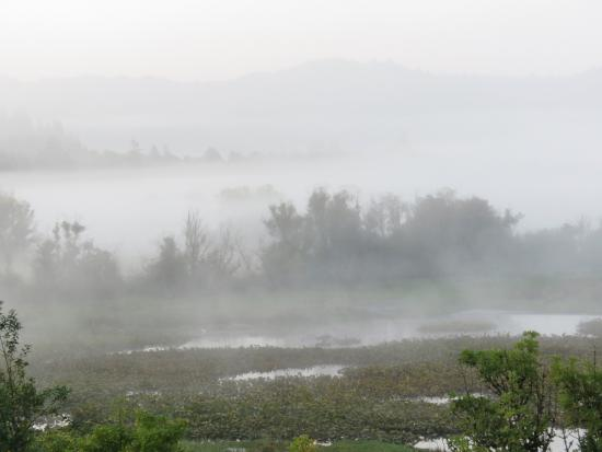 Myrtle Point, OR: Early morning mist over the wetlands