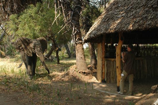 Lake Manze Tented Camp, Selous Game Reserve: Lake Manze - Main Area and visitos