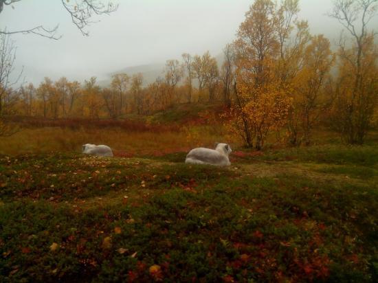 Polar Park