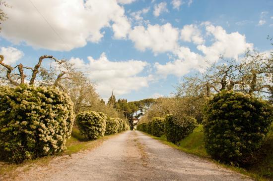 Azienda Agrituristica Villa La Morina: viale ingresso