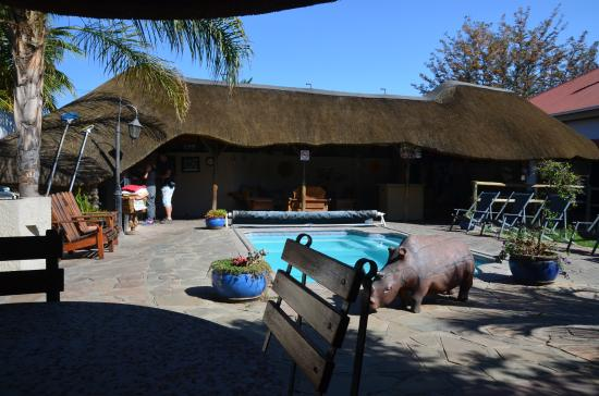 Chameleon Backpackers Hostel: Pool with bar