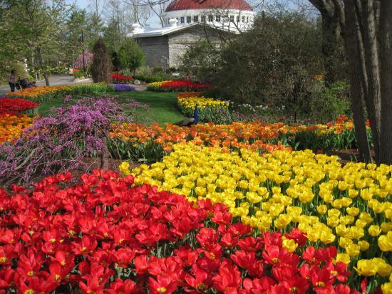 Cincinnati Zoo U0026 Botanical Garden: Tulips