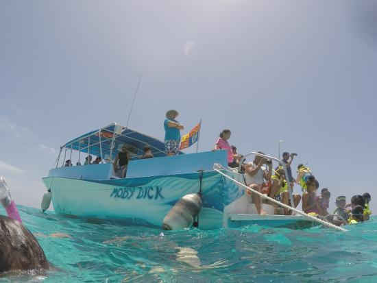 Moby dick tours cayman