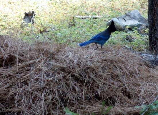 Tahoma Meadows B&B Cottages: Stellar Jay