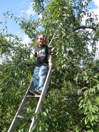 Stow, MA: Climb that tree