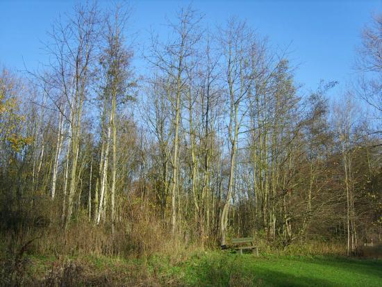 Denso Marston Nature Reserve