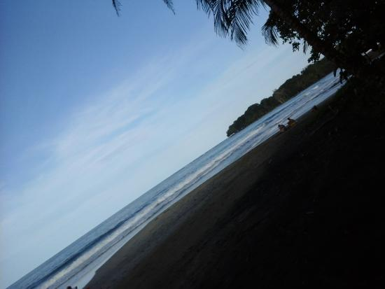 Camarona Caribbean Lodge: Playa en Cocles