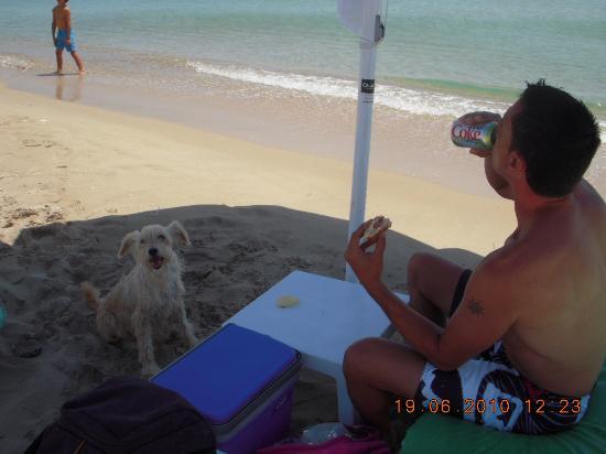 Ramo Beach: toutou de la plage