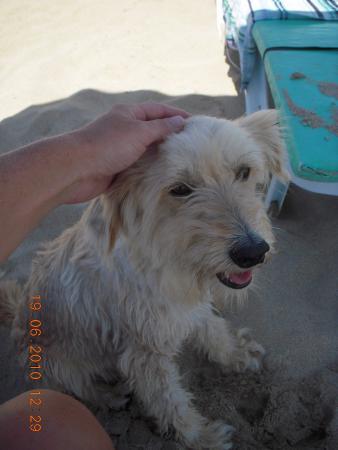 chien sympa de Ramo Beach