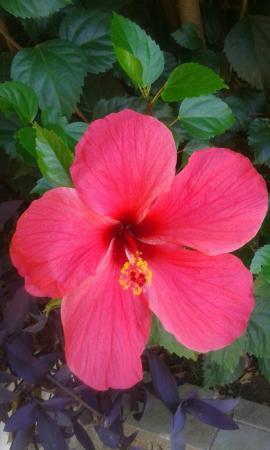 Castello Rosso Hotel: Blüten überall