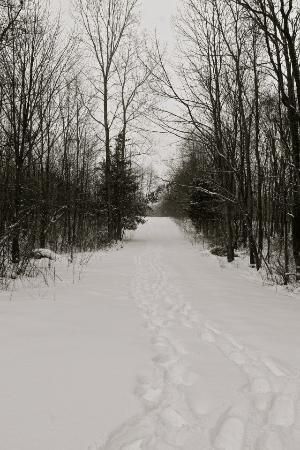 Allegan, MI: Snowshoe trails