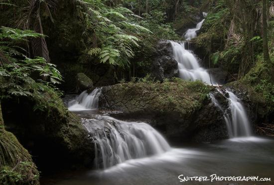 夏威夷熱帶植物園公園照片