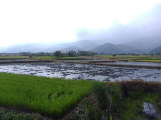 Cong Zai Liao Farm