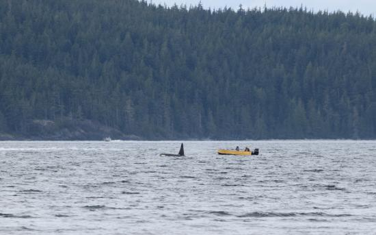 Nanaimo, Canada: Look how close he is to the boat