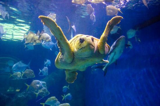 Giant Sea Turtle Picture Of Virginia Aquarium Marine