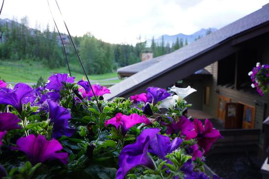 Fernie, Canadá: Flowers hanging from the balcony in the summer