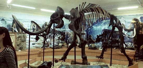 картинки мамонтов скелеты