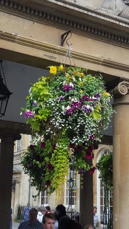 Bath Street: De magnifiques bouquets partout dans le centre ville