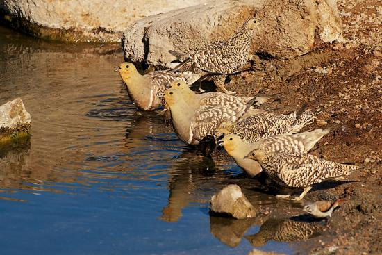 Experience the beauty of the wildlife at Sandfontein