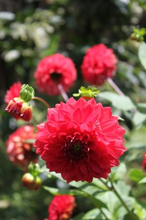 Bed and Breakfast Villa Riviera: Flowers @ Finca Neblina del Bosque in the Miraflor Reserve