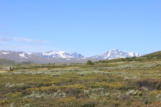 Hjerkinn Fjellstue og Fjellridning: View to Snøhetta