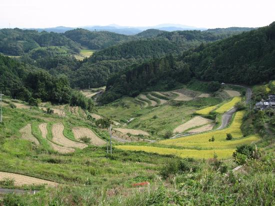 Kamimom, Terraced Rice Fields