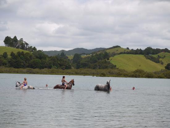Whananaki Holiday Park: Horsing around