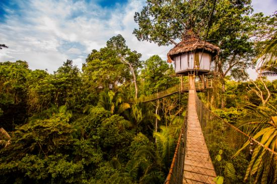 a review of the amazon rainforest We had a 3 day amazon tour with g adventures after 4 day inca trail trekking  amazon may give us an impression of survival tour and dangerous encounter to .