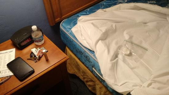 Tidewater Inn: The bedbug in the bag after we tore apart the bed