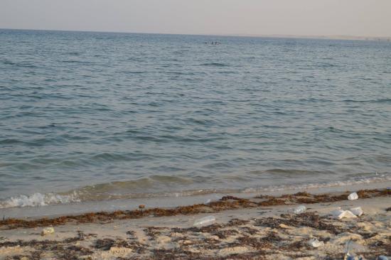 Uqair Beach