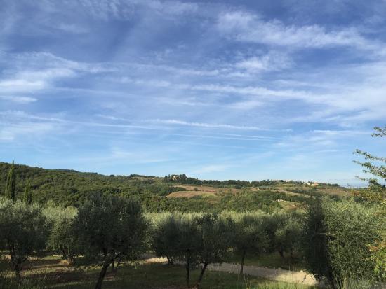 Tenuta Sant'Ilario: photo4.jpg