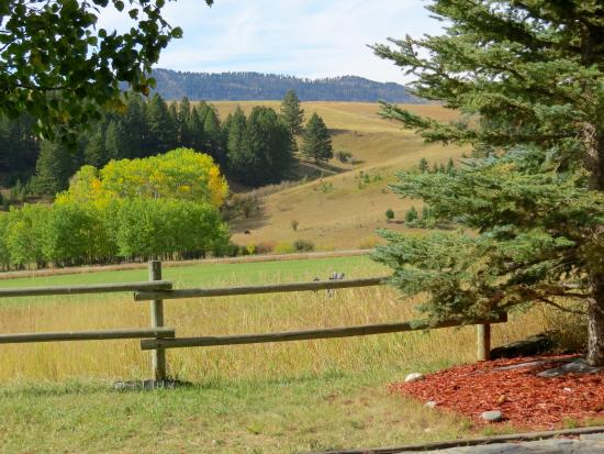 Howlers Inn Bed & Breakfast and Wolf Sanctuary: view from the inn
